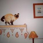 au dessus d'un lit, le chat sacré de birmanie