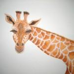 trois girafes détail