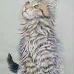 chaton maine coon  crayons et pastel (24X34cm)   vendu