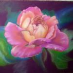 une rose  -  pastel tendre  (réservé)