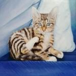 le chat bleu  -  huile  à l'eau  ( 40 X 40 )