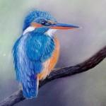 l'oiseau sur la branche  - pastel sec sur pastelcard